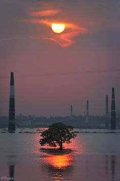 Ashulia, Dhaka, Bangladesh - Lone tree standing strong amid the flooded landscape. This tree somehow had managed to survive the brickfields in the backgound (partially submerged too) which are viewed as another root cause of massive deforestation in the last few decades - Stop Deforestation - Ecology - Environment
