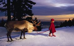 Top 10 Vancouver Winter Events & Activities: Winter Activities on Grouse Mountain