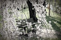 park bench in the spring