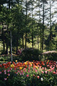 아침고요수목원의 여름