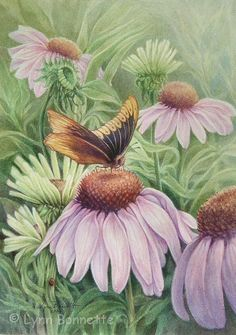 Butterfly and Conflower