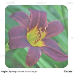 Purple Lily Party Coaster Square Paper Coaster