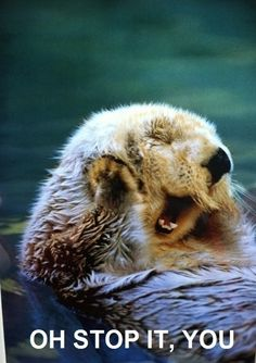 How I imagine otters feel about being compared to Benedict Cumberbatch.