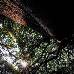 【take3_fu】さんのInstagramの写真をピンしています。《#明石 #明石公園 の#木 🌲  #太陽 #逆光 #林 #森 #公園 #葉 #park #forest #wood #leaf #sun》