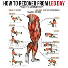 fitness Develop massive legs with the ultimate muscle stack that consists of 4 legal steroids for increasing muscle mass quickly without side effects or PCT. Fitness Hacks, Fitness Workouts, Leg Workouts For Men, Gym Workout Tips, Weight Training Workouts, Fitness Motivation, Lifting Workouts, Cardio Gym, Workout Plans