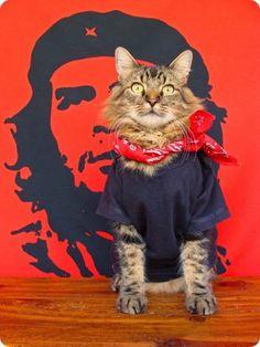 Lorenzo gato modelo famoso