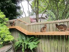 One of my readers showed me how he built this Awesome large DIY backyard cat enclosure. These kitties are so spoiled and happy! They now have tunnels with a plexiglass roof and a large enclosure with climbing posts. Diy Cat Enclosure, Outdoor Cat Enclosure, Reptile Enclosure, Cat Run, Cat Walk, Low Maintenance Pets, Cat Fence, Cat Cages, Cat Tunnel