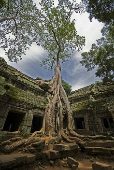 Ta Prohm - The Jungle Temple II by Discaciate, via Flickr