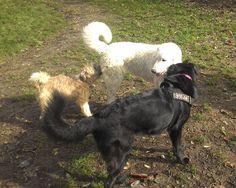 - Torino con Penelope e Peja Dogs, Animals, Animales, Animaux, Pet Dogs, Doggies, Animal, Animais