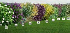 Backyard Trees, Backyard Fences, Garden Landscaping, Garden Park, Lawn And Garden, Home And Garden, Shade Garden, Garden Plants, Pin On