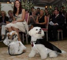 Dog Wedding Story