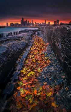 Last breath of autumn by Bogdan Vasilic on 500px #chicago #Michigan_lake