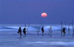 Stilt Fisherman at dusk, Unawatuna, #Galle, Sri Lanka