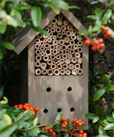 Wooden Insect Box