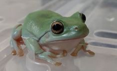 Frog Names - Over 500 Best Ideas For Naming Your Pet Frog