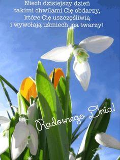 Good Night, Happy Birthday, Plants, Nighty Night, Happy Brithday, Urari La Multi Ani, Happy Birthday Funny, Plant, Good Night Wishes