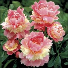 A imagem pode conter: flor, planta e natureza