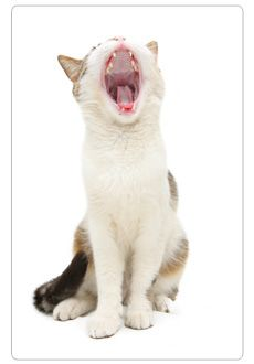 Does your cat have a message for you? Learn to read cat body language by clicking the image!