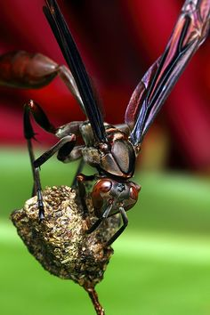 500px / Photo Wasp by Paulo Torck