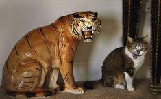 21 juuri oikeaan aikaan otettua valokuvaa kissoista   Vivas