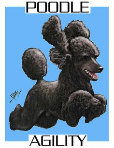 Flying back poodle Beagle Dog Breed, Chihuahua Breeds, Poodle Cross Breeds, Poodle Drawing, Silver Poodle, Puppy Finder, St Bernard Dogs, Dog List, Dogs Golden Retriever