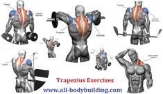 Trapezius Exercises