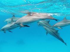 Don't Allow New Dolphin Eating Theme Park Target: Taiji, Japan Mayor Kazutaka Sangen  Goal: Stop the establishment of theme park where you can swim with dolphins, then eat them.