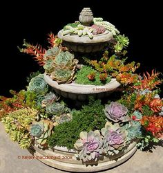 ABC of Succulents: Sources