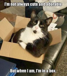 Funny Cat Pictures Birthday #view