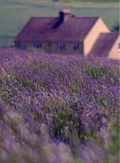 Wham! I just died in your arms.... because too much lavender :P