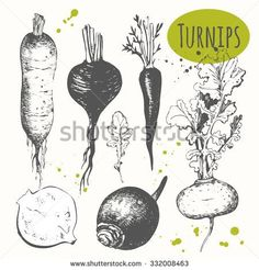 Image result for root vegetable images