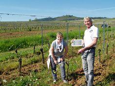 La visite des pieds de vigne adoptés au Domaine Stentz-Buecher #GourmetOdyssey