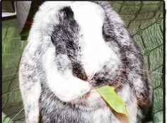 Tambor Pereira #Conejo #veterinario www.veterinarioexoticos.com