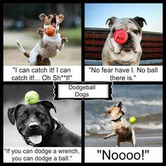Dodgeball Dogs