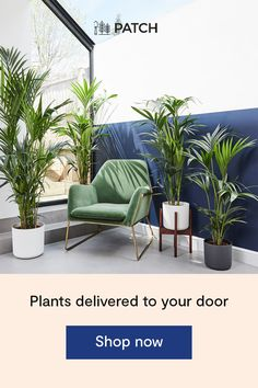 Shop Big Ken, the kentia palm. Balcony Furniture, Outdoor Furniture Sets, Kentia Palm, Small Toilet Room, Box Bedroom, Living Room Entertainment Center, Plant Delivery, Bedroom Wall Designs, Multipurpose Room