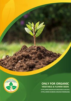 Browse through from huge range of organic vegetable seeds. organic seeds for Indian Vegetables available for Home/Kitchen/Terrace gardening needs at best prices online from ONLY FOR ORGANIC, most trusted online seed store in India. Vegetable Seeds Online, Organic Vegetable Seeds, Organic Seeds, Organic Vegetables, Vegetable Garden, Flower Bed Borders, Small Greenhouse, Small Gardens, Outdoor Gardens