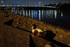 ARTIFICIAL LIGHT | 猫|ネコ|ねこの日々