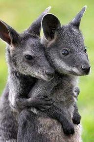 kangaroo sibling besties