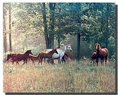 Impact Posters Gallery Horses in Pasture Animal Wildlife Wall Decor Mahogany Framed Art Print Picture Black Framed Art, Framed Art Prints, Poster Prints, Framed Wall, Horse Posters, Animal Posters, Animal Prints, Contemporary Framed Art, Horse Wall Art