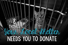 Adopting a pet isn't the only way to help a local shelter this winter. What do they need most? And how can you help? Check out our list of the top 8 things your local shelter desperately needs you to donate.