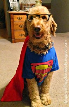 1000 Images About Costume Outfits Dress Up On Pinterest Goldendoodle Dog Costumes And Pet