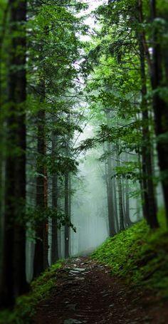 .forest path beautful
