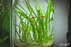 How To Make An Ecosystem In A Bottle With Fish & Plants