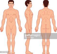 תוצאת תמונה עבור body proportions fat male