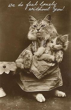 Not sure if these are Maine Coon Cats, but mine would pose like this if I asked very nicely ;-)