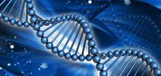 Genetic Testing & Family Planning / Prenatal Testing - Huntington's Disease Society of America