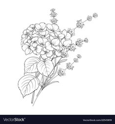 Floral design of lavender and hydrangea isolated vector image on VectorStock Embroidery Flowers Pattern, Hand Embroidery Designs, Floral Tattoo Design, Floral Design, Hydrangea Tattoo, Left Arm Tattoos, Simplistic Tattoos, Floral Drawing, Tattoo Project
