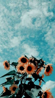 35 Most Popular Flower Wallpapers For Your Iphone Colorful Wallpaper,Flower Wallpaper,Landscape Wallpaper. Cute Summer Wallpapers, Pretty Wallpapers, Interesting Wallpapers, Simple Wallpapers, New Wallpaper Iphone, Iphone Background Wallpaper, Mobile Wallpaper, Iphone Backgrounds, Iphone Wallpapers