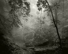 Frank Hunter: Pools of Light, platinum/palladium print @ Thomas Deans Fine Art
