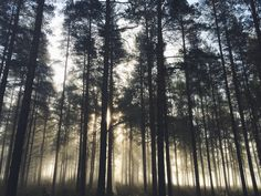 Foggy forest in the middle of Finland, Karstula. So beautiful.
